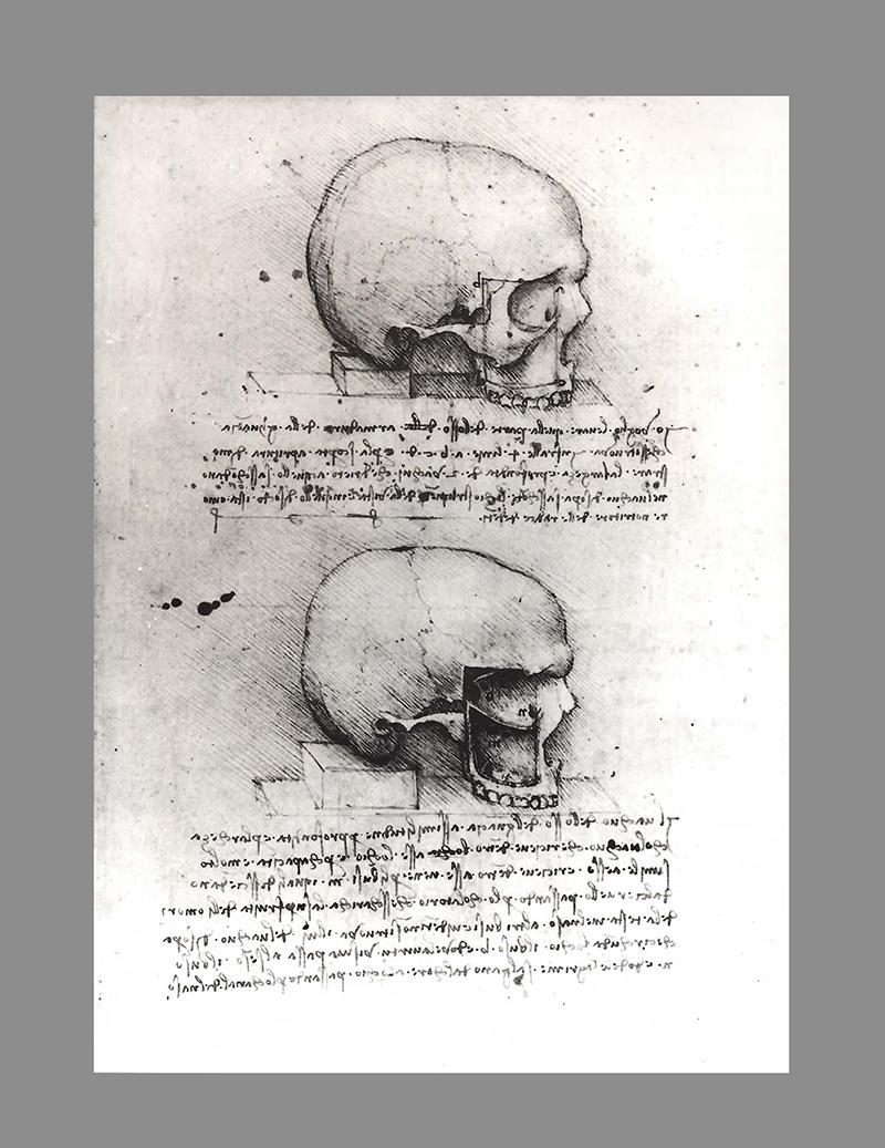 Estudo do crânio humano, desenhados por Leonardo da Vinci em 1489.