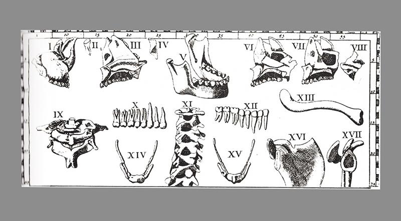 Estudos anatômicos gravados em cobre século XVlll